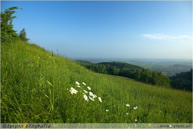 widok na Zwiernik z góry Kokocz