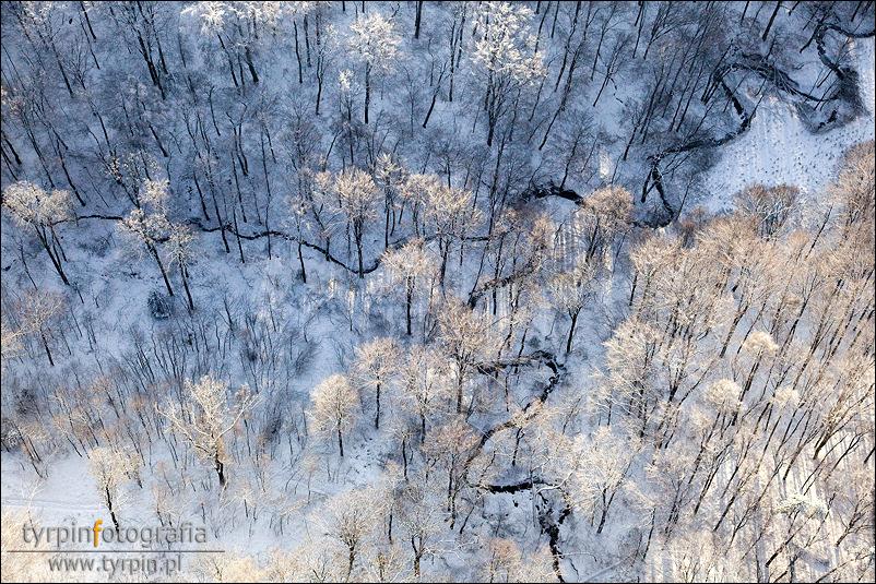 Las bukowy pomiędzy Braciejową a Niedźwiadą